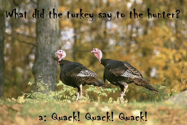 turkeys-autumn-joke