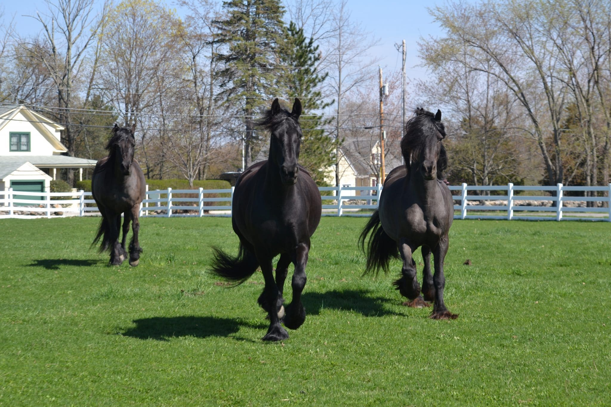 Black Diamond Star Studios, Friesians of Tranquility