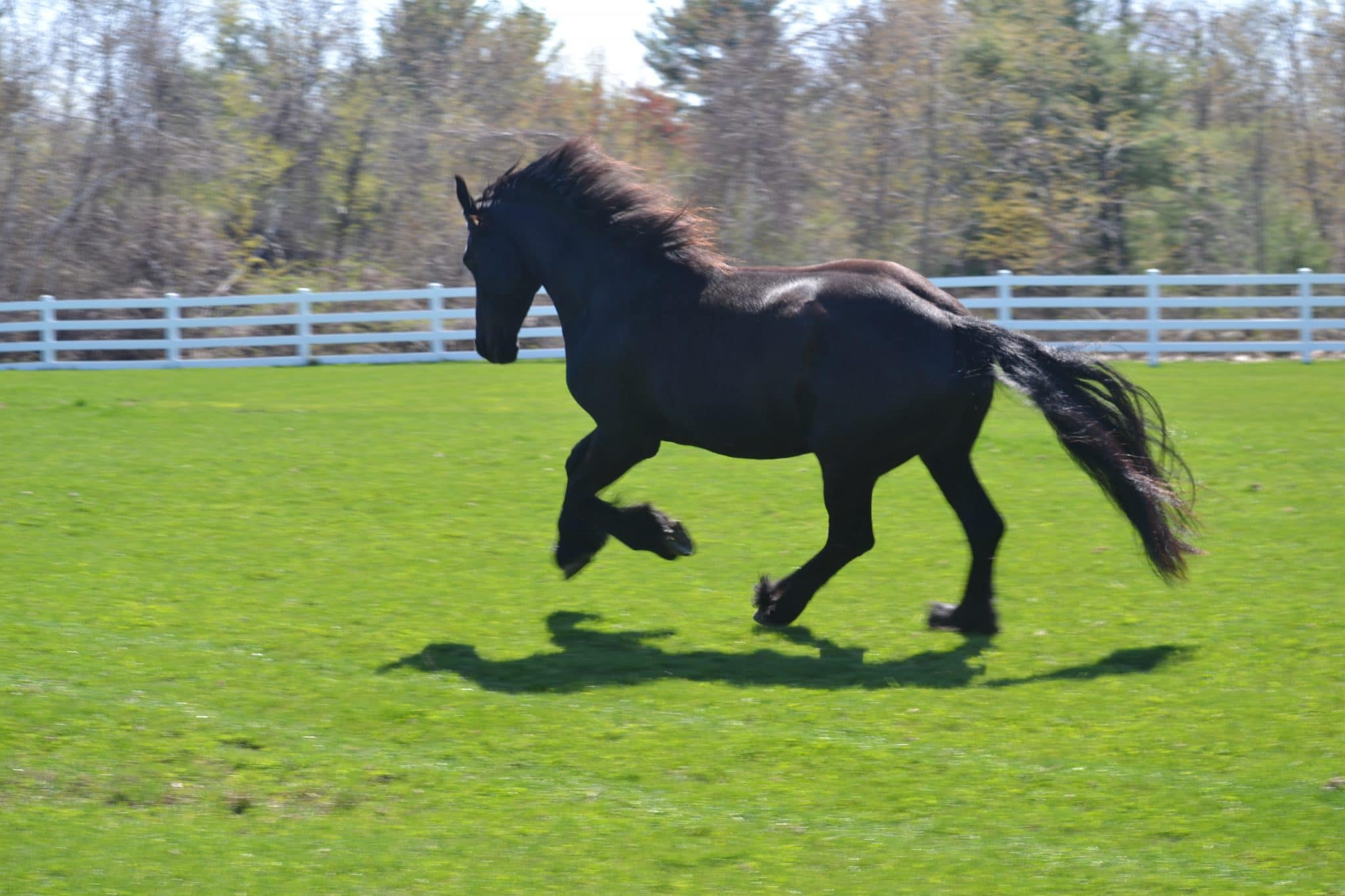 Black Diamond Star Studios, Friesians of Tranquility, Elsje